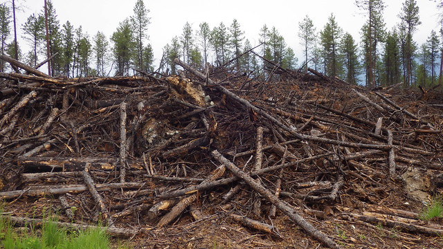 Non-merchantable, or low value, wood waste such as this can be converted into biochar. USDA Forest Service photo by Deborah Page-Dumroese.